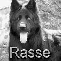 wesen altdeutscher schäferhund